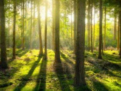 Stoffbeutel und Nachhaltigkeit